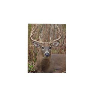 Whitetail Deer Buck Jigsaw Puzzles