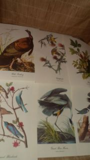 16 1950s John James Audubons birds of America Color Prints
