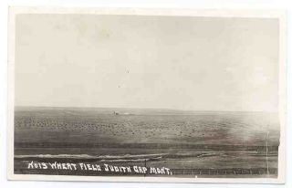 Montana Judith Gap Wheat Fields C 1918 RP Postcard