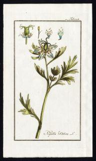 Antique Botanical Print Nigella Sativa Black Kumin Zorn 1796