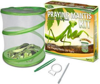 Praying Mantis Green Earth Insect Life Cycle Habitat