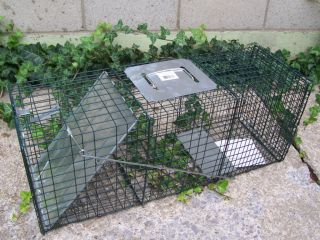 New Advantek Large Live Animal Cage Trap