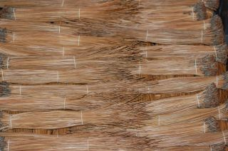 10 Pounds Dried Natural Brown Longleaf Pine Needles Basketry