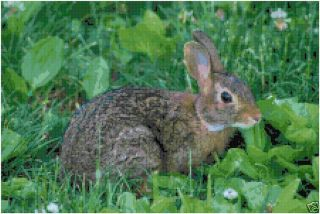 Rabbit Counted Cross Stitch Pattern Bunny in Meadow