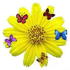 Sunflower & Butterflies#24 Laser Return Address Labels