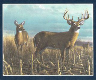 BEAUTIFUL DEER BUCKS & DOES IN FRAMES BLUE EDGES NEW Wallpaper bordeR